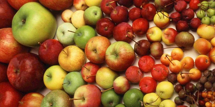 انواع سیب در ایران