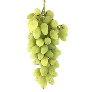 انگور ریش بابا