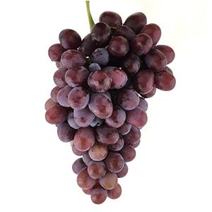 انگور کندری