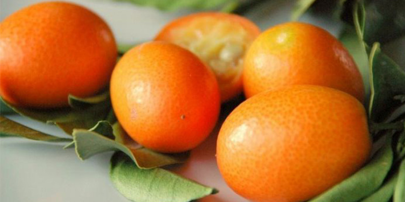 بچه پرتقال یا کام کوات