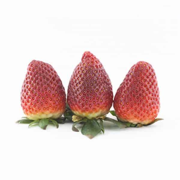 خرید توت فرنگی تازه - قیمت توت فرنگی