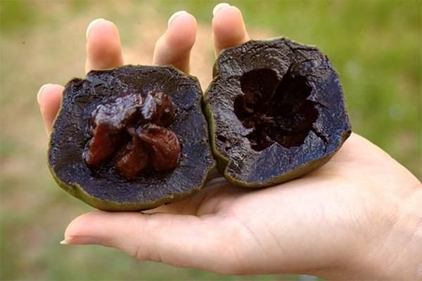 ساپوت سیاه ، میوه های استوایی عجیب دنیا