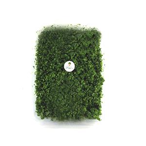 سبزی کوکو ، سبزی خرد شده