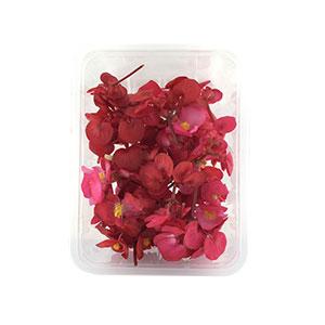 خرید آنلاین گل خوراکی بگونیا - خرید گل خوراکی بگونیا