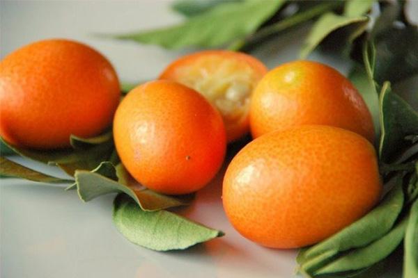 کام کوات یا بچه پرتقال