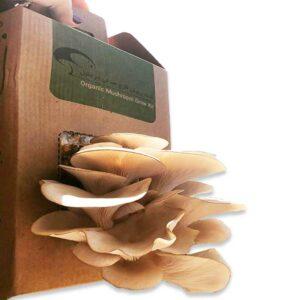 قیمت کیت پرورش قارچ خوراکی صدفی