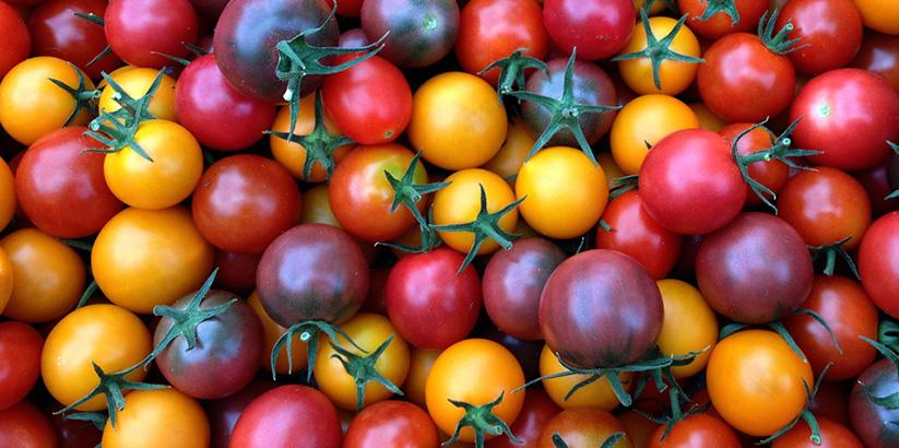 قیمت گوجه گیلاسی