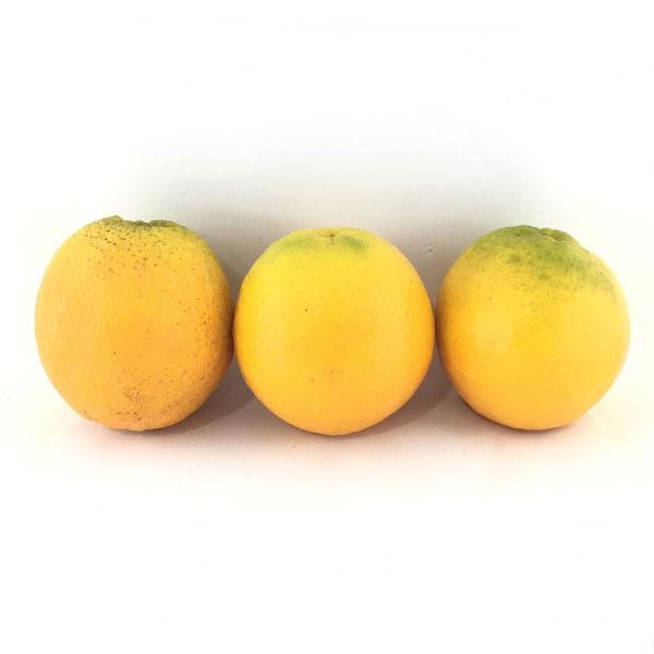 خرید آنلاین پرتقال والنسیا - خرید پرتقال والنسیا
